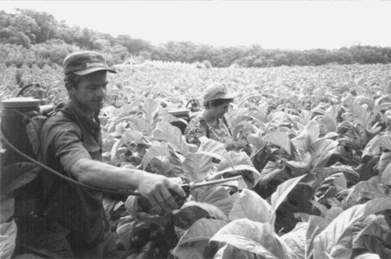 Ungeschützter Pestizideinsatz im Tabakanbau in Brasilien