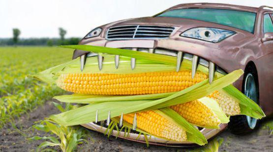 Auto frisst Mais -- die Menschen hungern?
