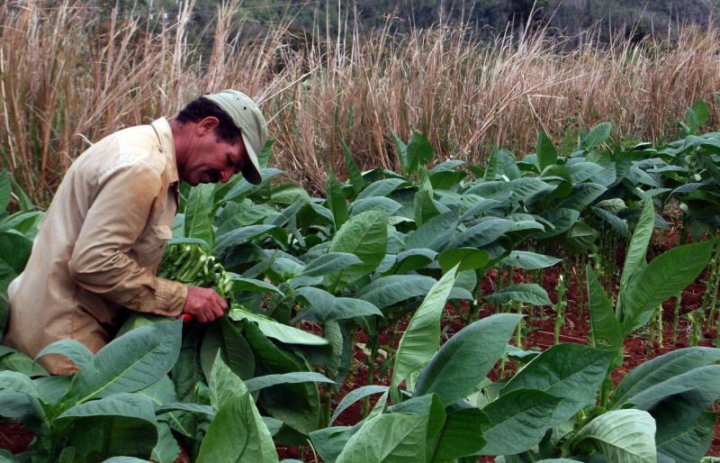 Die Bauern in Kuba können ihre Überschüsse ab 2014 frei verkaufen