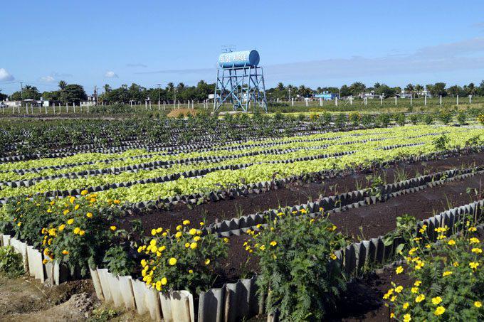 Kuba urbane Landwirtschaft