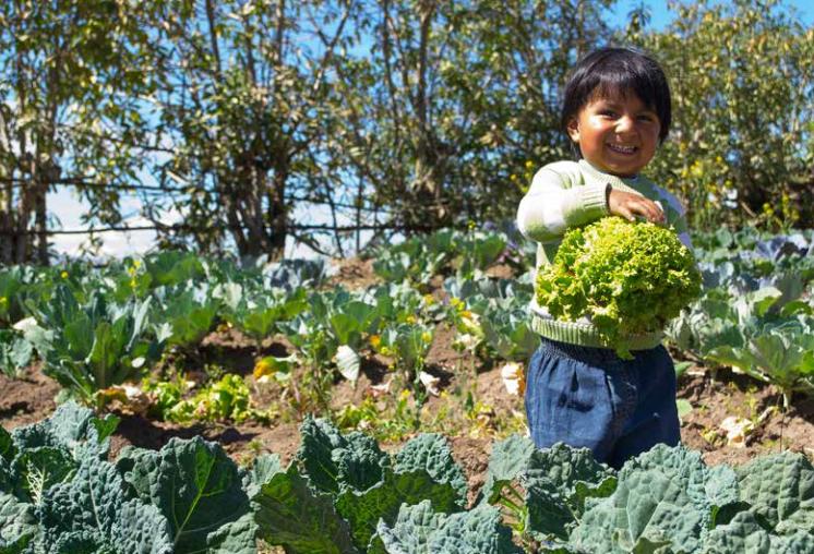 Das ecuadorianische Partizipative Urbane Landwirtschaftsprogramm gewann einen Preis für weltbeste Politiken, die Agrarökologie voranbringen
