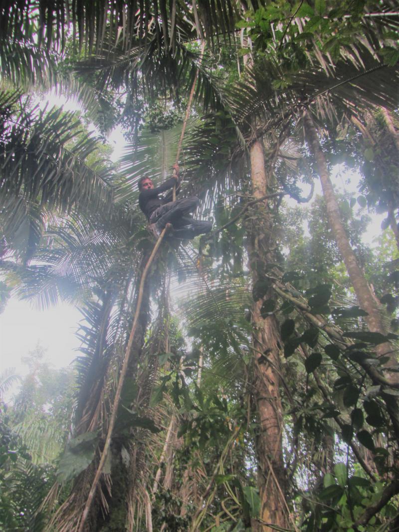 Weil sie die Amazonasregion schützen wollten, wurden in Brasilien 300 Aktivisten ermordet