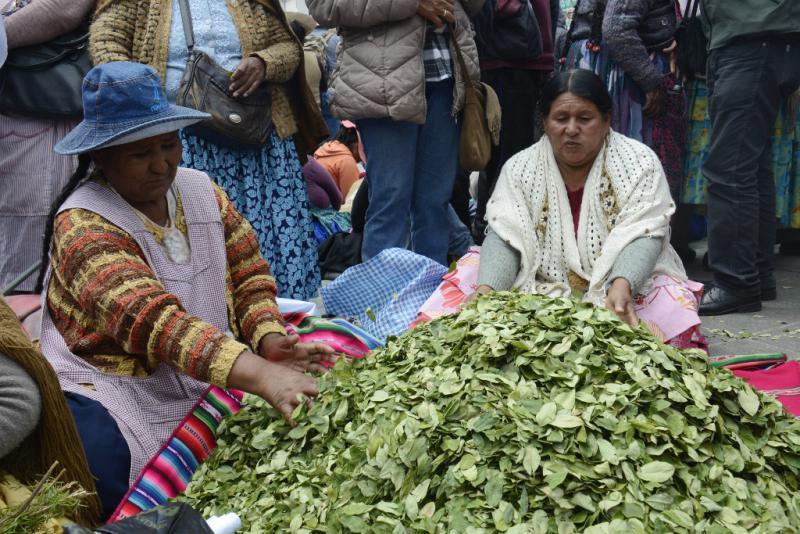 """""""Tag des Koka-Kauens"""" in Bolivien. Die Regierung von Evo Morales setzt sich seit Jahren international für die Entkriminalisierung des traditionellen und kulturellen Gebrauchs von Koka-Blättern ein"""