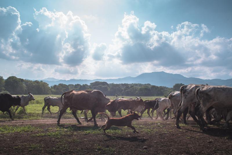 Kleinbauern kämpfen um den Erhalt ihrer Ländereien am Cerro