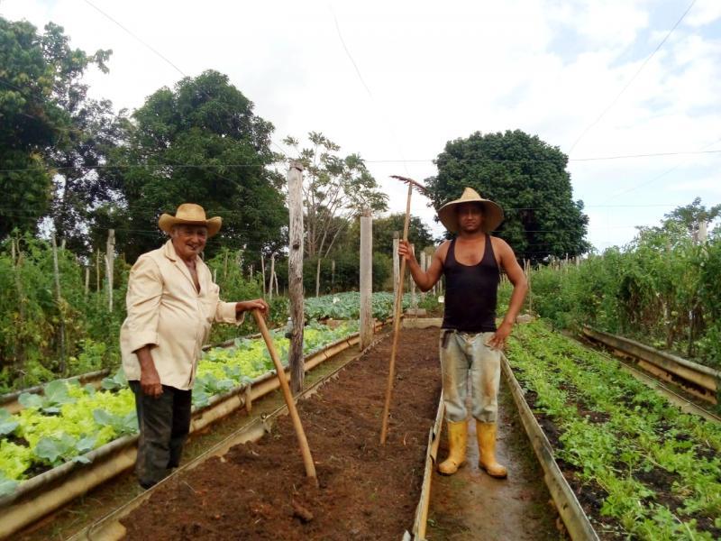 """In Kuba seit der Agrarreform 1959 Realität: """"Das Land denen, die es bearbeiten"""""""