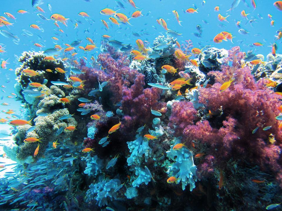 Was Sind Korallenriffe