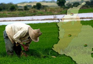 Kolumbianischer Bauer bei der Arbeit