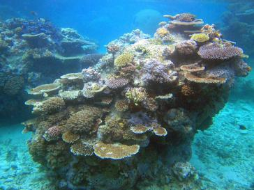 Korallenbänke - ein aussterbendes Ökosystem