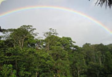 Ein Regenbogen ist über unberührtem Urwald zu sehen.
