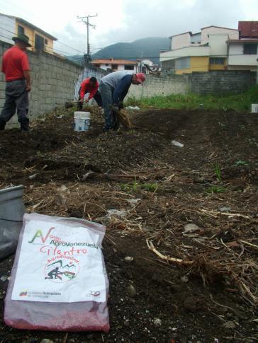 Nutzung urbaner Freiflächen zum Gemüseanbau