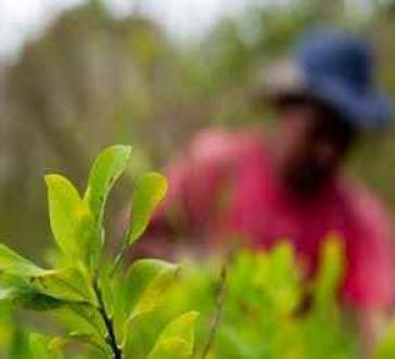 Bislang ohne Alternative, um das Überleben ihrer Familien zu sichern: Kokabauern in Kolumbien