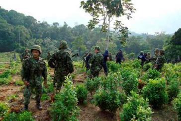 Soldaten zerstören Koka-Anpflanzungen im Gebiet von Catatumbo