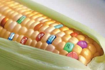 Dürfen gentechnisch verändertes Maissaatgut in Paraguay einsetzen: Monsanto, Syngenta und BASF