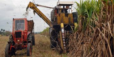Die Zuckerrohrernte 2014 beträgt in Kuba mehr als 1,6 Millionen Tonnen