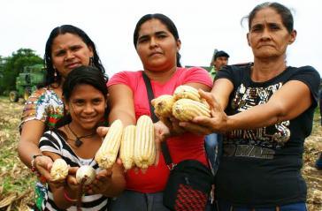 In der Sozialistischen Kommune El Maizal wird vor allem Mais angebaut