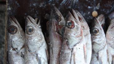 Chile und Peru haben mit Russland die Erhöhung ihrer Fisch-Exporte vereinbart