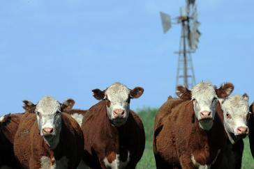 Demnächst auf russischen Tellern: Rindfleisch aus Argentinien