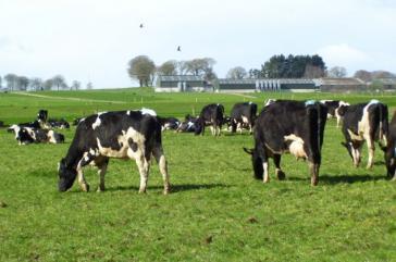 Die Agrarwirtschaft ist ein sehr wichtiger Faktor im Land