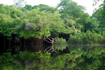Amazonas-Regenwald bei Manaos im Nordwesten von Brasilien