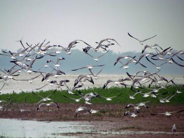 Möwen am Rio Paraná in Argentinien: Flora und Fauna sind von dem Herbizid Glyphosat bedroht