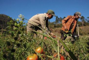 Kubas Landwirte