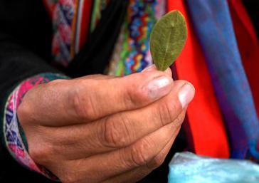 Ein indigener Bauer in Bolivien hält ein Koka-Blatt in der Hand