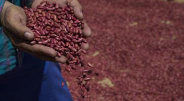 Am Zentrum für Gentechnik und Biotechnologie (CIGB) in Kuba wird unter anderem an der Entwicklung gentechnisch veränderter Bohnen gearbeitet