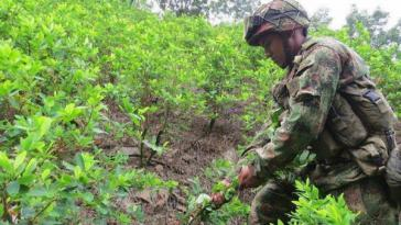 Ein Soldat der kolumbianischen Streitkräfte reißt Koka-Pflanzen aus