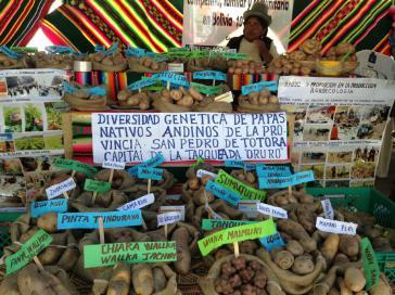 Eine Kleinbäuerin im Bolivien verkauft auf Markt biologisch angebaute Kartoffeln