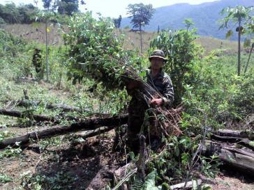 Militär und die Polizei In Bolivien gehen verstärkt gegen illegale Koka-Anpflanzungen vor
