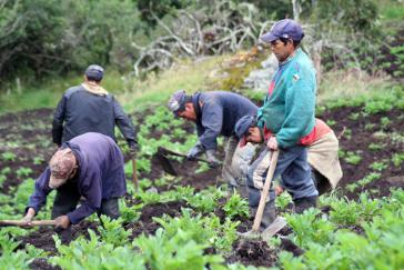 Die zwischen Regierung und Farc vereinbarte Landreform sollte den Kleinbauern in Kolumbien zugutekommen