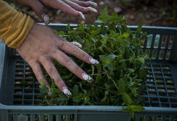 Kuba ergreift Maßnahmen, um die Nutzung von Land und die Lebensmittelproduktion zu verbessern