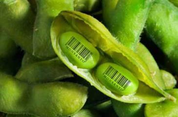 Das Landwirtschaftsministerium von Mexiko erhebt schwere Vorwürfe gegen den US-Konzern Monsanto