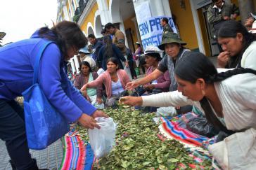 """Am 11. Januar wird in Bolivien der """"Nationale Tag des Koka-Kauens"""" begangen, hier in Cochabamba"""