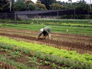 Ökologischer Landbau in Kuba
