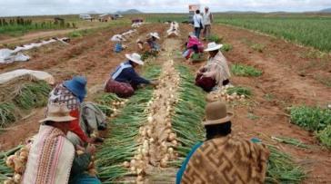 In elf Jahren hat Boliviens Regierung über 700 Millionen US-Dollar in mehr als 15 Programme zum Nutzen des landwirtschaftlichen Bereichs investiert