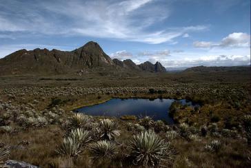 Der Páramo, eine einzigartige Moorlandschaft, existiert nur in Höhenlagen über 3.000 Meter in Kolumbien