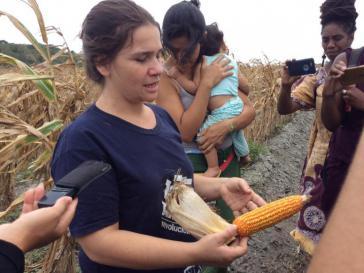 Die landwirtschaftlich-soziale Produktionseinheit Caquetios in Cabudare, Venezuela, baut die heimische Guanape-Maissaat an