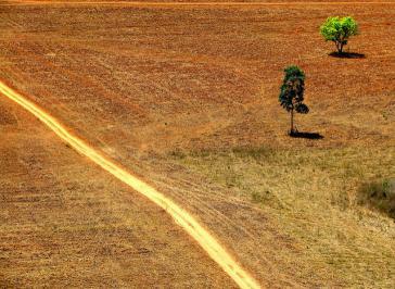 Gelder aus Steueroasen führen indirekt zu Rodungen im Amazonas. Brasilianischer Regenwald wird der Agrarwirtschaft geopfert