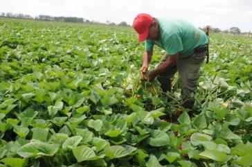 Kubas Regierung will mit der Gesetzesänderung die Landwirtschaft auf der Insel ankurbeln