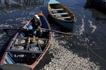 Die Insel Chiloé im Süden von Chile ist erneut von einer Umweltkatastrophe betroffen