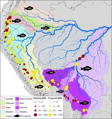 Bereits gebaute oder in Bau befindliche (rot) und geplante Wasserkraftwerke (gelb) in den andin-amazonischen Flussbecken. Die Zahl auf den Fischen markiert den Fischreichtum in jedem Becken
