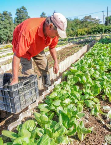 Urbane Landwirtschaft in Kuba