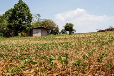Die gentechnisch veränderten Sojafelder sind überall zu sehen und reichen dicht an die Häuser heran