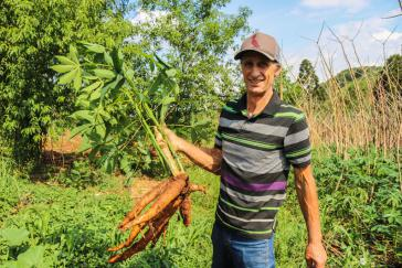 Roque Gandin erntet in seinem Garten Maniok, ein Grundnahrungsmittel in Brasilien.