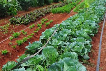 umweltfreundlichen Agrarbetriebe