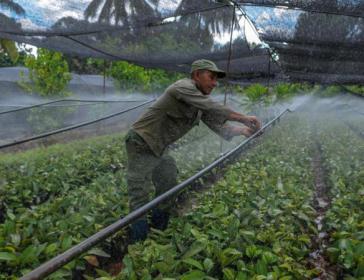 In Kuba sollen künftig gleiche Bedingungen für alle landwirtschaftlichen Produzenten herrschen, um die Produktion von Lebensmitteln anzukurbeln und Importe einzusparen