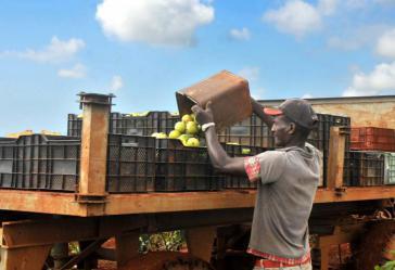 """""""Acopio"""" zeichnet sich für die Abholung, Lagerung und Verteilung des Gros der auf der Insel produzierten Lebensmittel verantwortlich"""