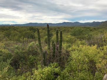 Blick in das Naturschutzgebiet Sierra La Laguna, Mexiko