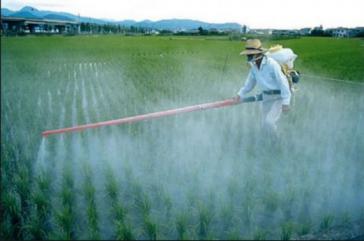 In Mexiko werden massiv hochgiftige Pestizide eingesetzt, die staatliche Kontrolle ist unzureichend